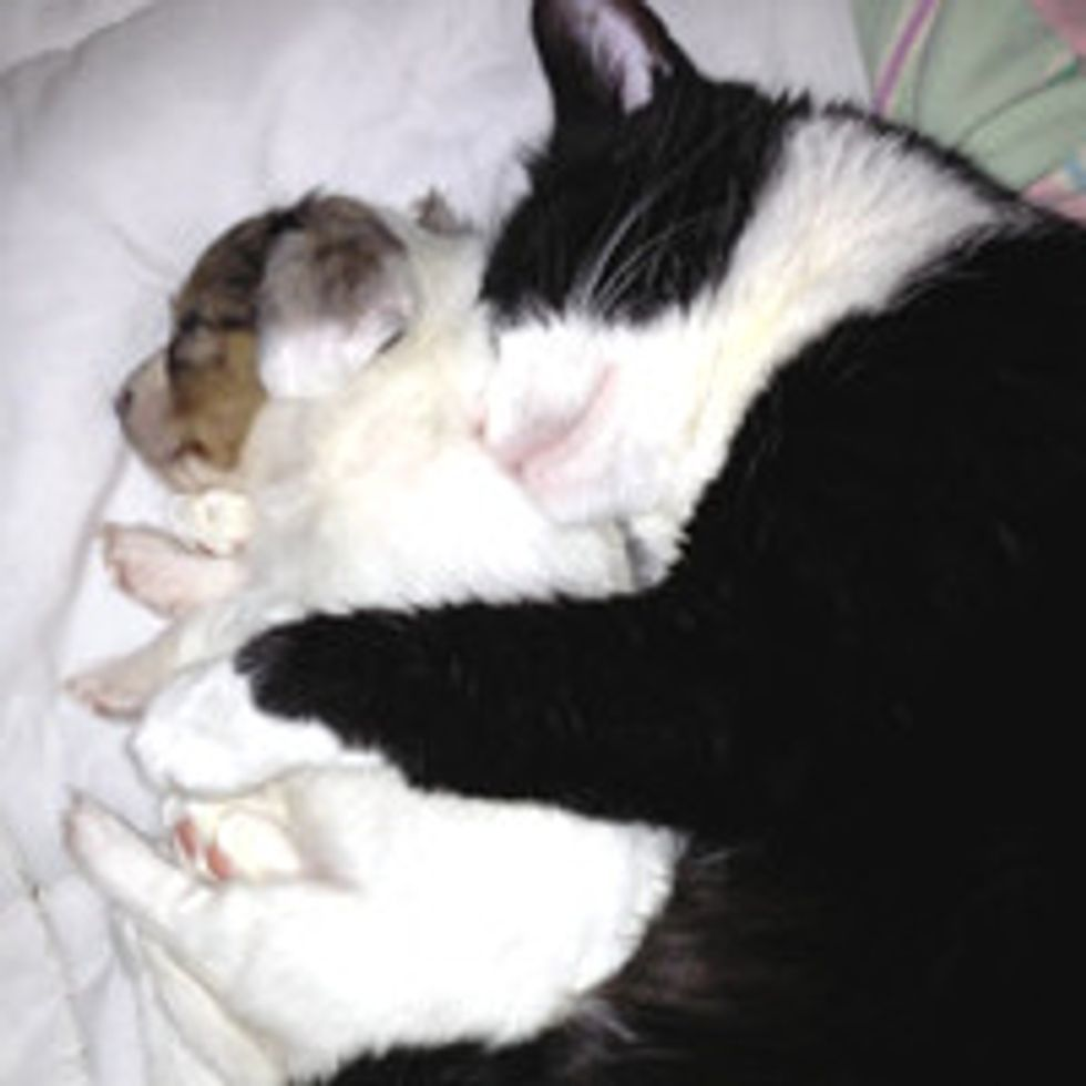 Rescue Cat Cuddles Adopted Puppy to Sleep