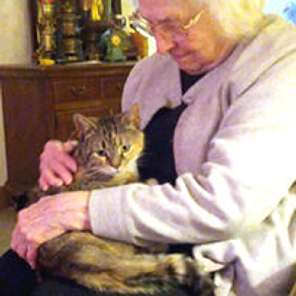 Starving, Pregnant Stray Gets a Second Chance