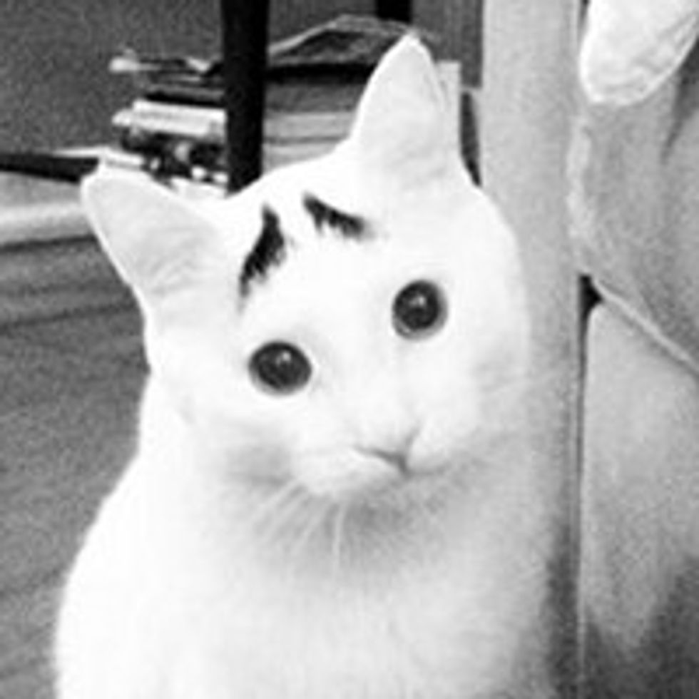 Sam the Cat with Eyebrows and a Permanent Worried Face