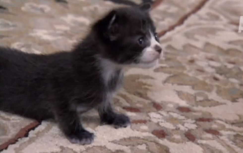 Kitten looks for New Mom - Too Cute!
