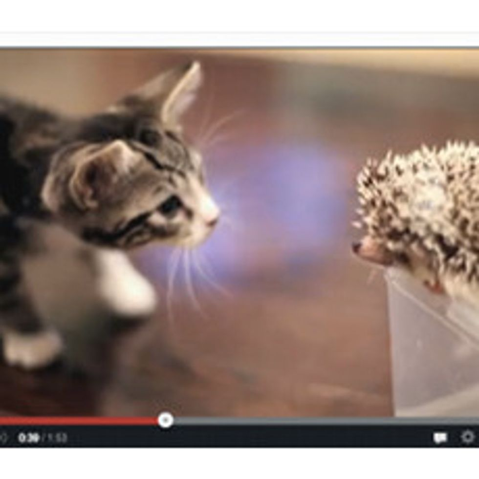 Kitty Meets Hedgehog