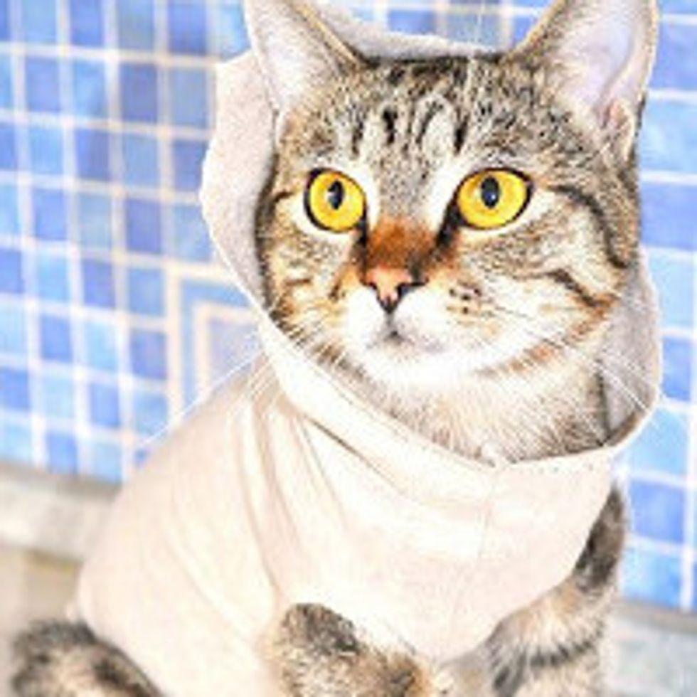 Olly the Cat: Survivor, Fighter
