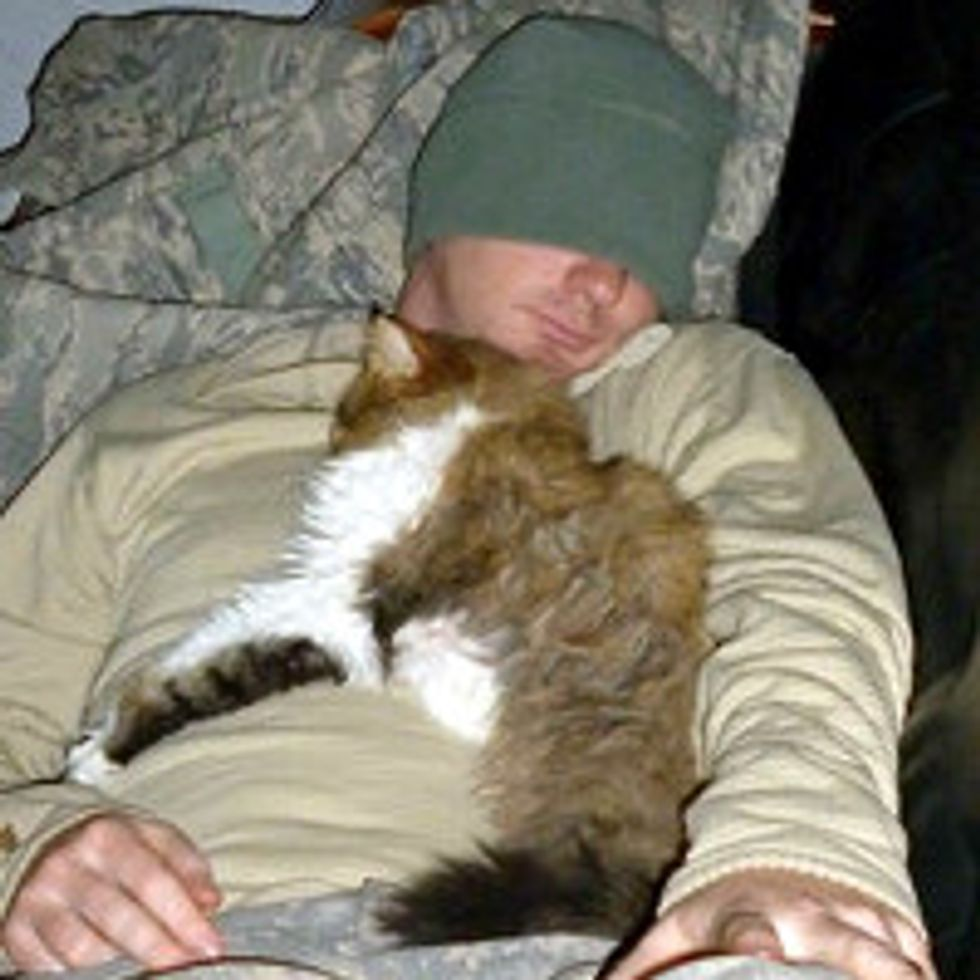 Story Behind the Photo of Kitty Adopted by Soldiers in Kuwait