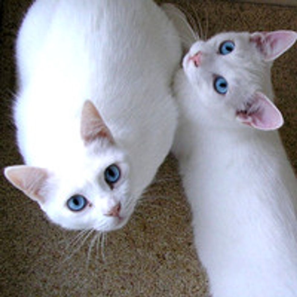Story of Two Deaf Cats: Mom and Son