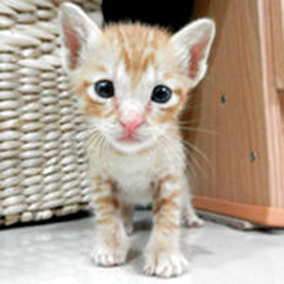 Tiny Ginger Regains Strength and New Life