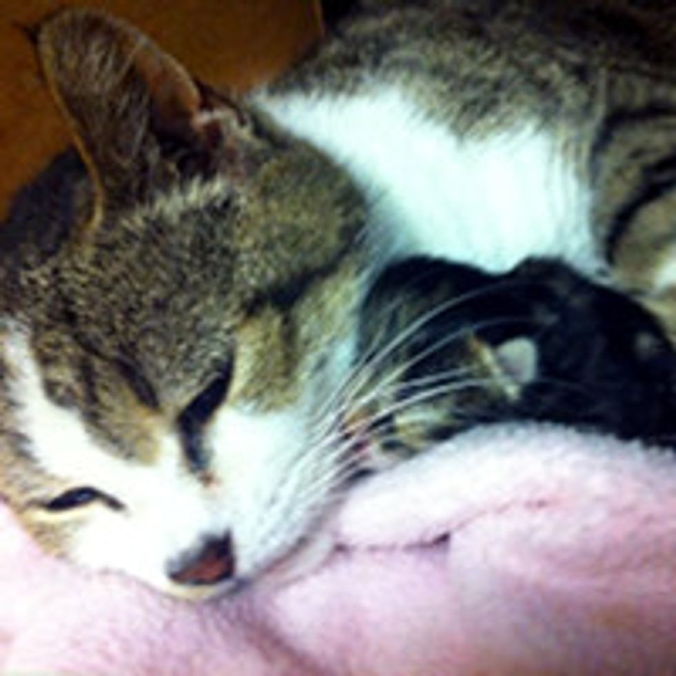 Cat Mom Gives Birth to Her Only Kitten