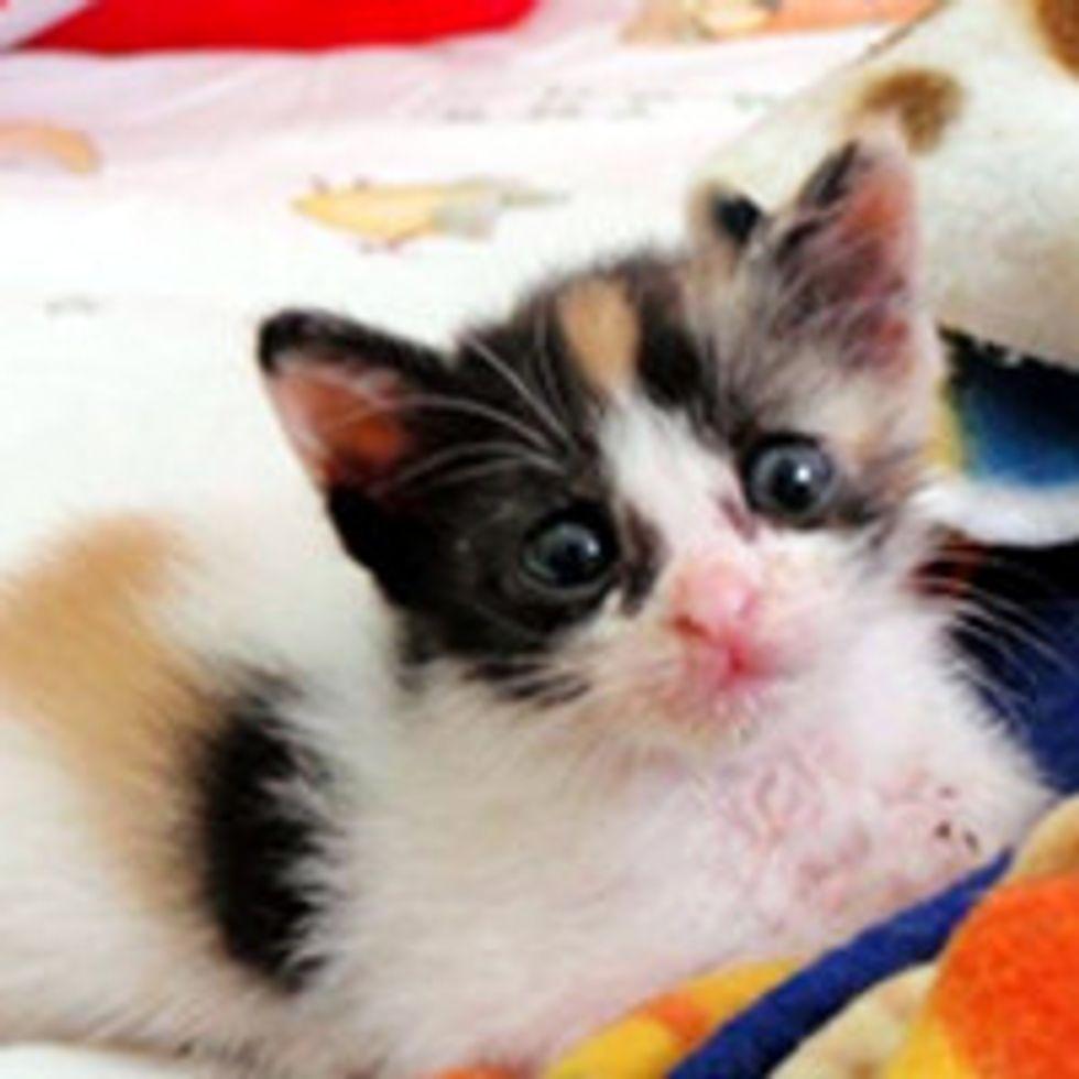 Woman Runs 30 Minutes Through Traffic to Save Kitten