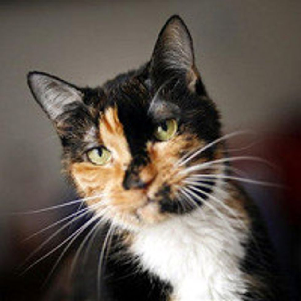 Cat Travels 190 Miles to Reunite With Family