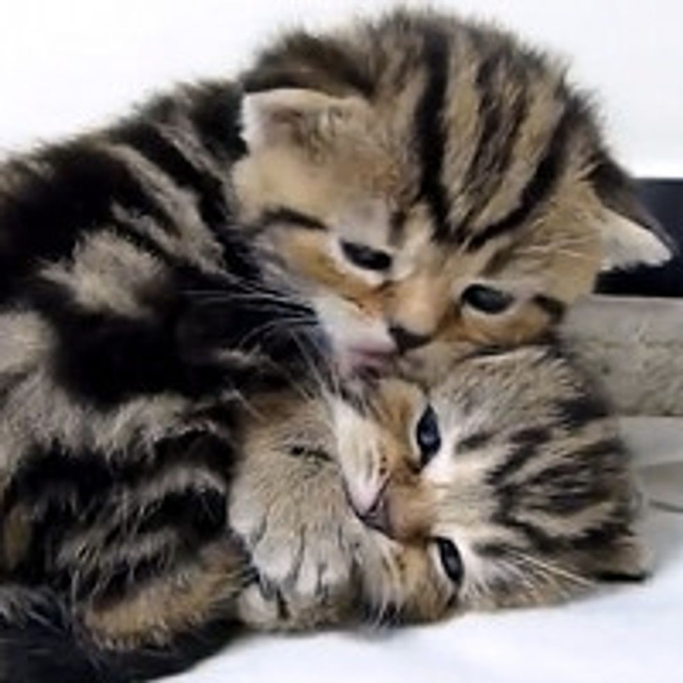 Top 20 cats hugs for Valentine's Day