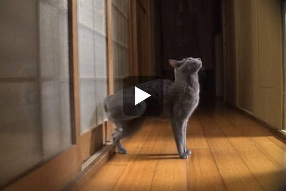 Cat Knocks the Door with Speed Kicking