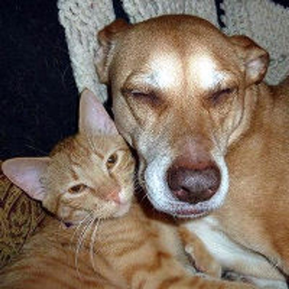 Cat and Dog from Same Shelter, Become BFFs at Forever Home