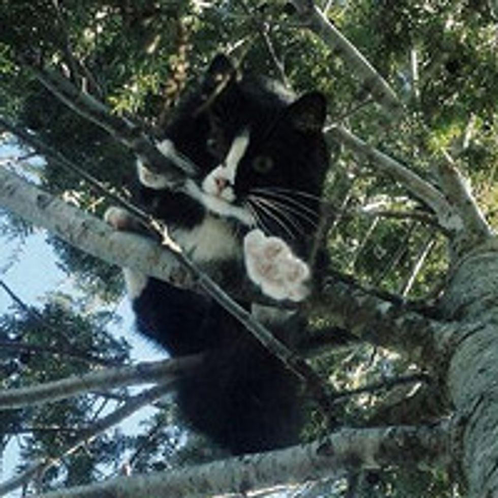 Cat Stuck in Tree for 3 Days Saved and Reunited with Family