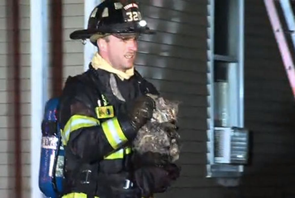 Firefighters Save 87 Cats from Burning Home