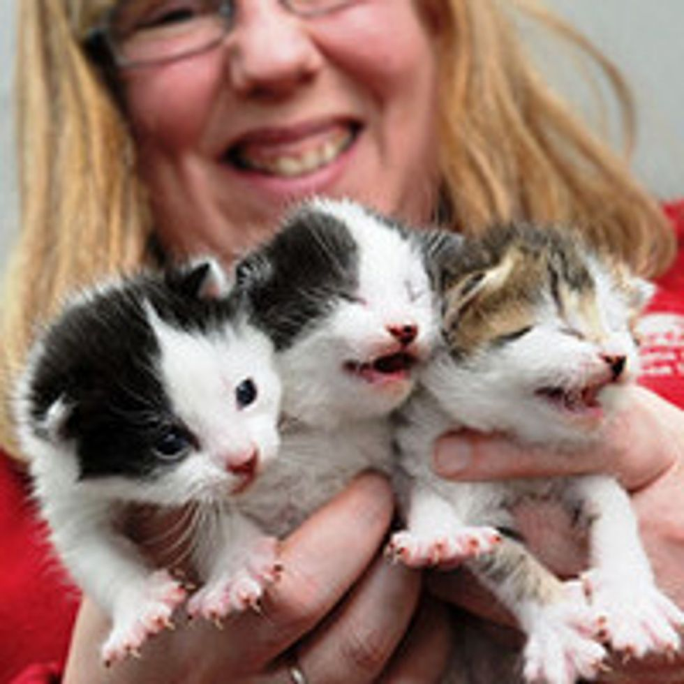 Stray Cat Mama Gives Birth Seconds After Arriving in Hull RSPCA