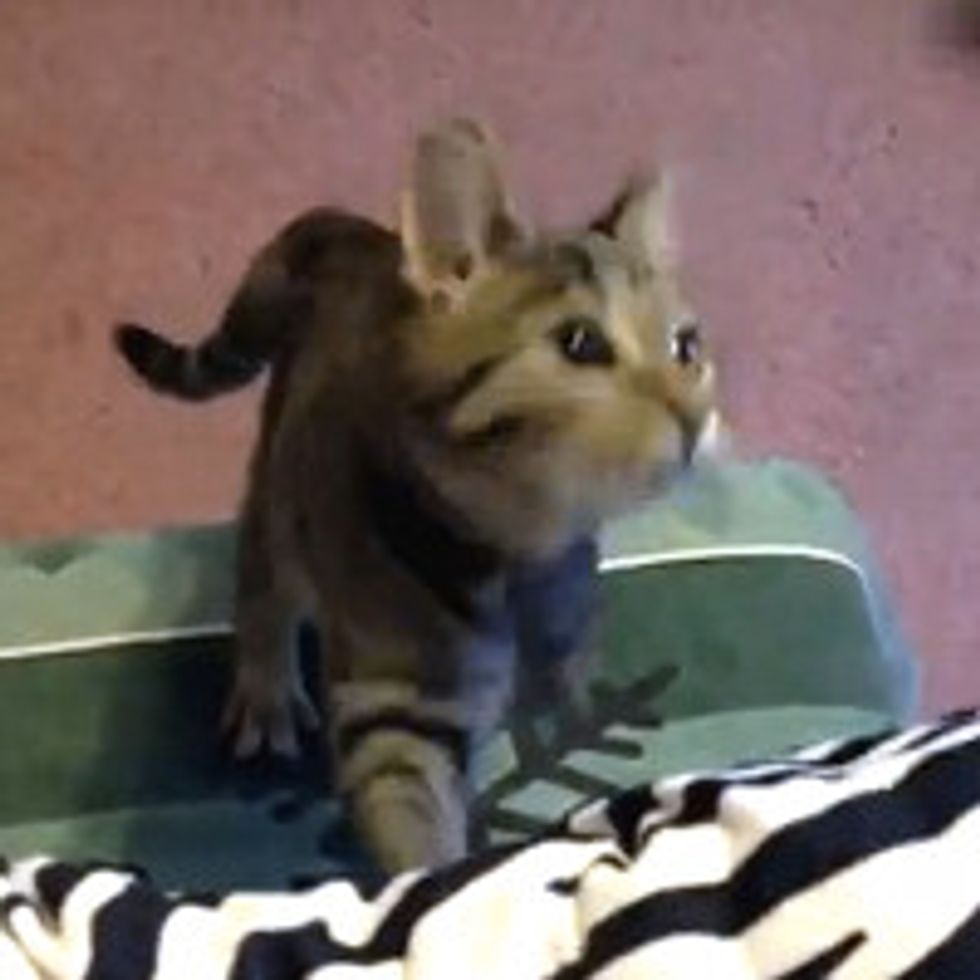 Poppy the 3-legged Rescue Cat Inspires with Her Story
