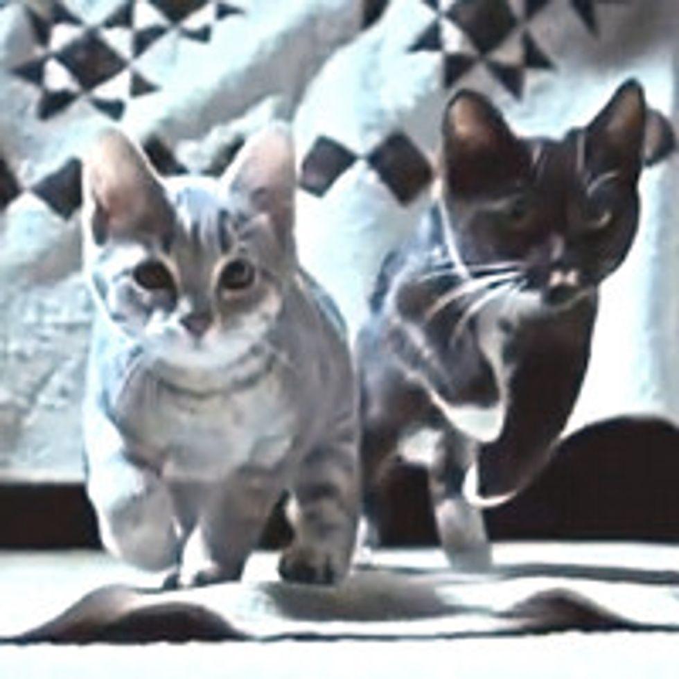 Furry Feline Sock Purrtectors