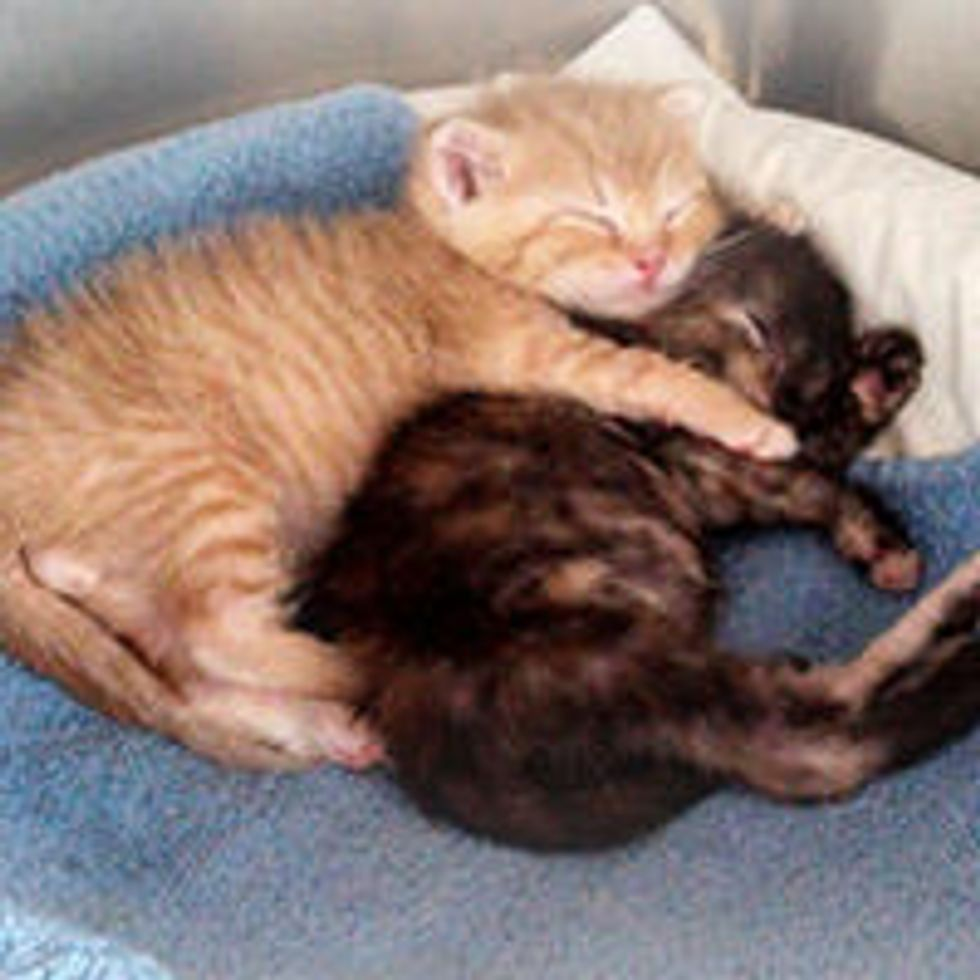 Newborn Rescues from Hopelessness to Happiness
