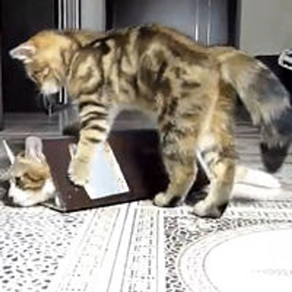 Kittens and Box