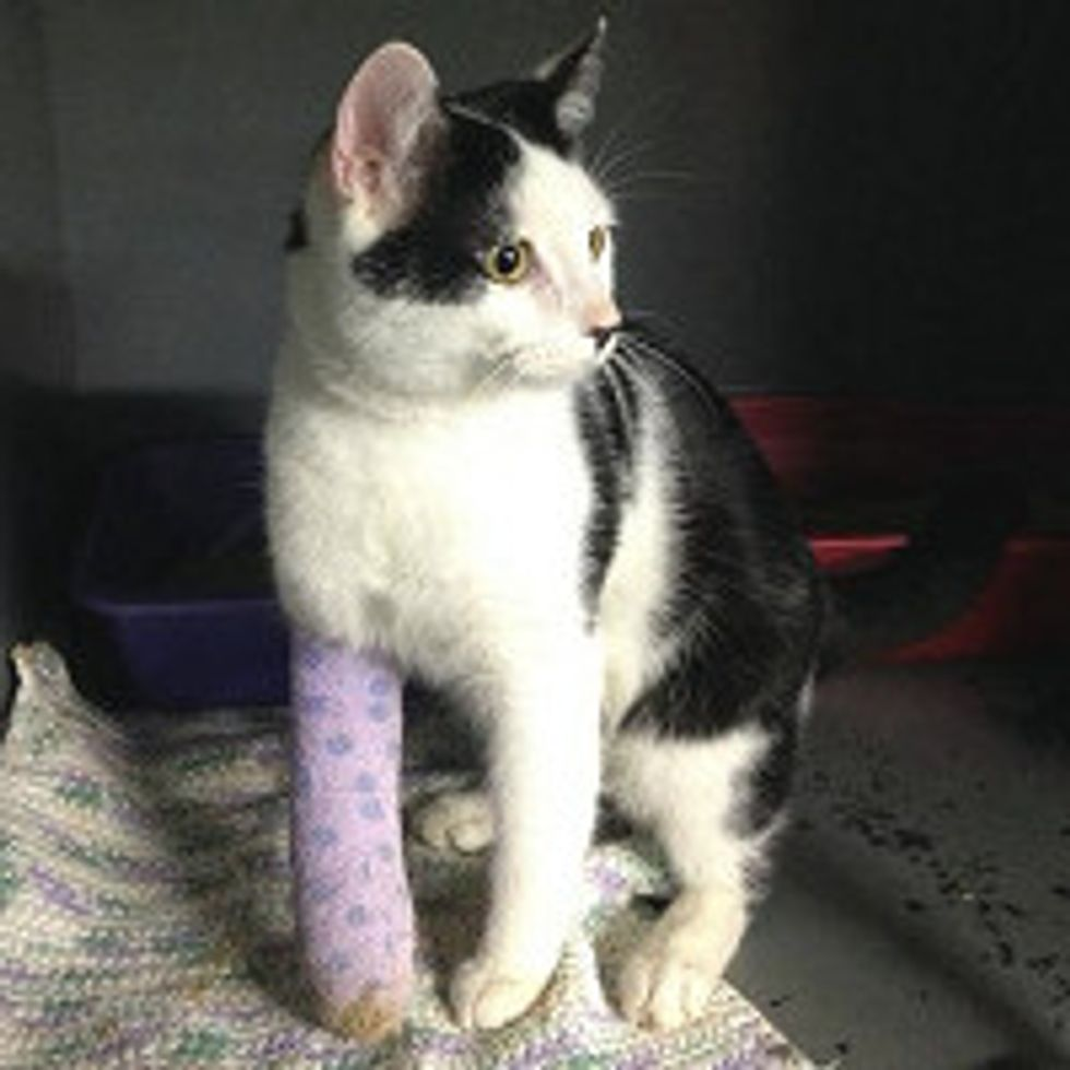 Cat Survived Hit & Run Car: Journey to Full Recovery