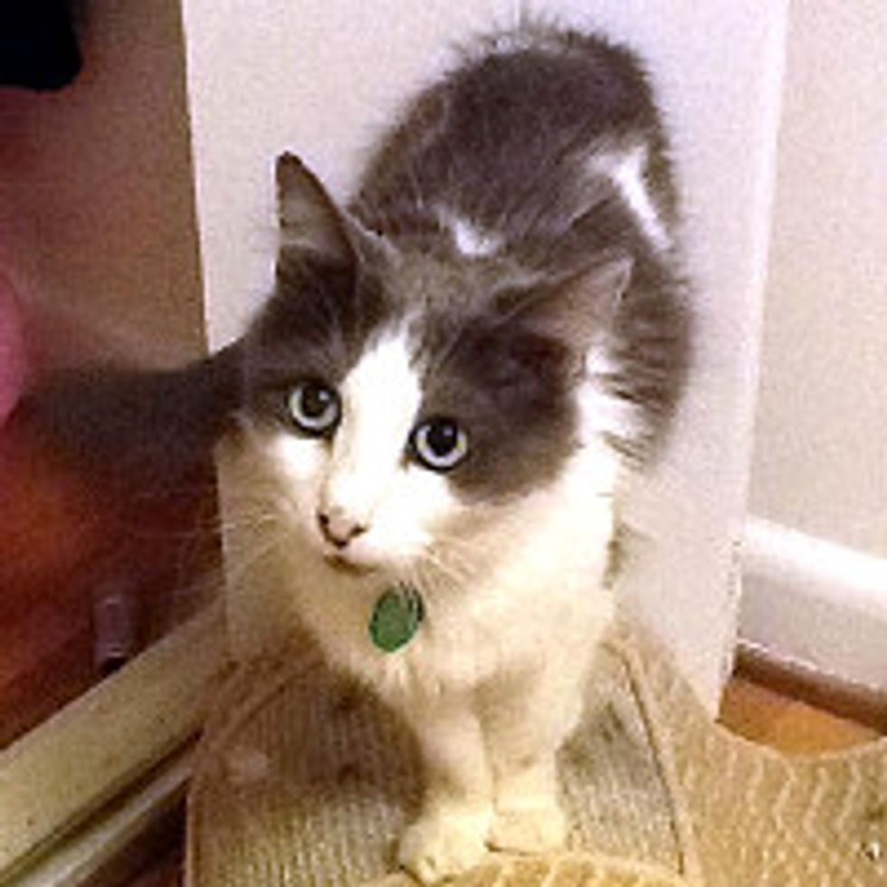 Milagra the Miracle Cat Lost in Fire Returns