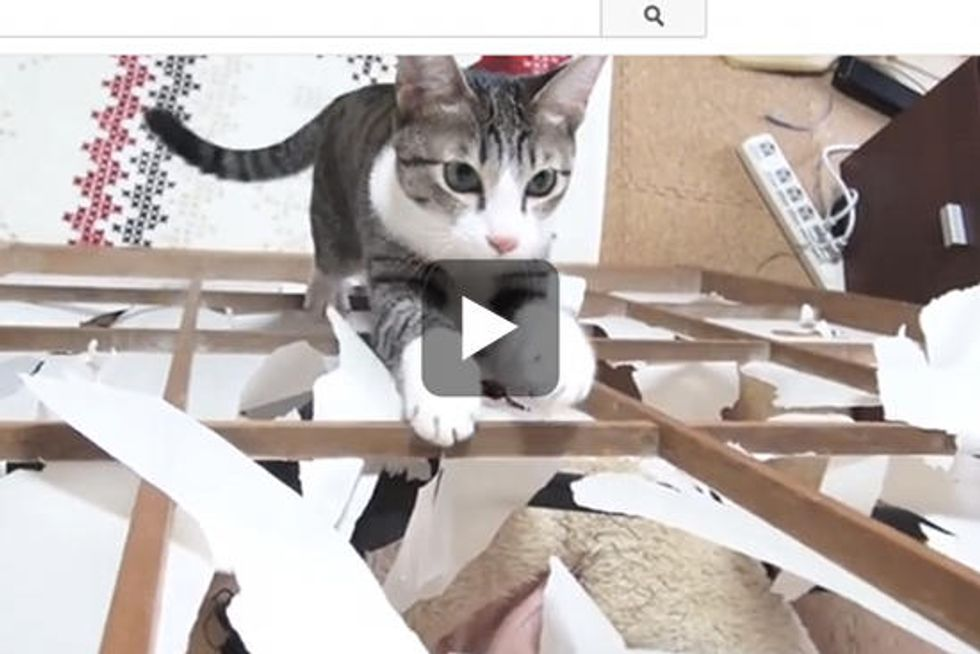 Kitty Tears Up Shoji Door