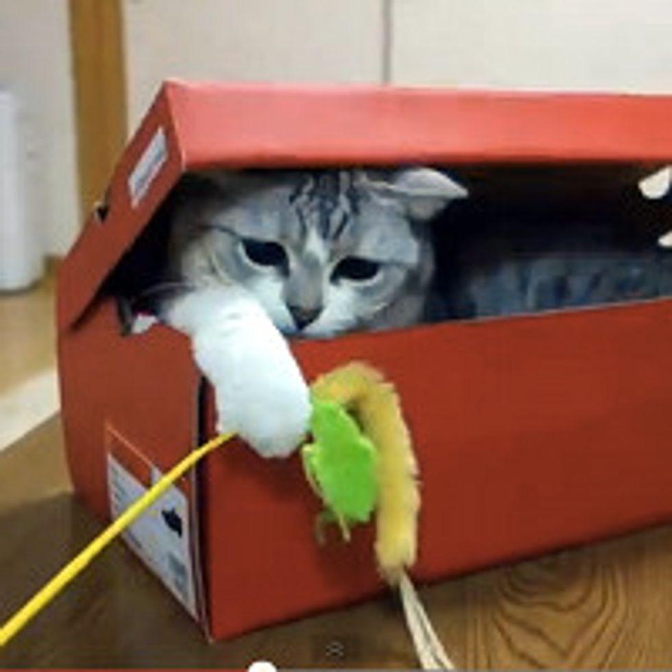 Kitty Ambushes in Box