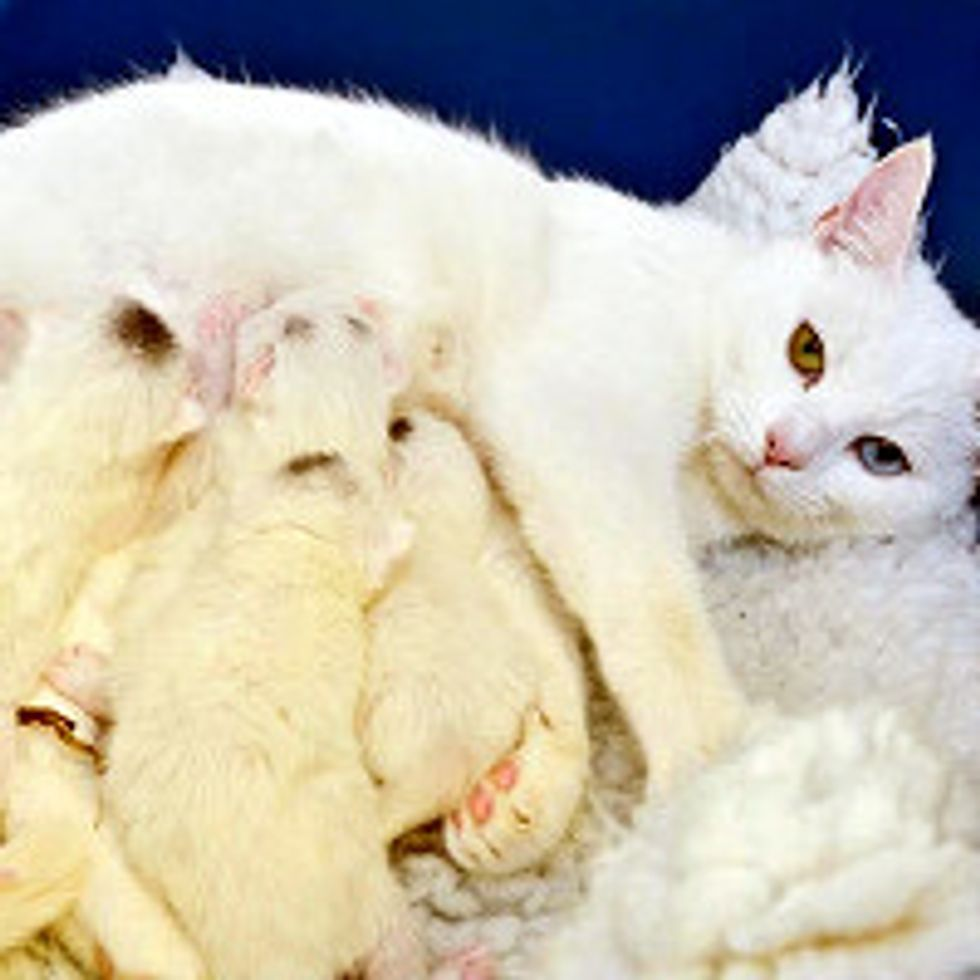 Surrendered Cat Brings Four Others Along With Her