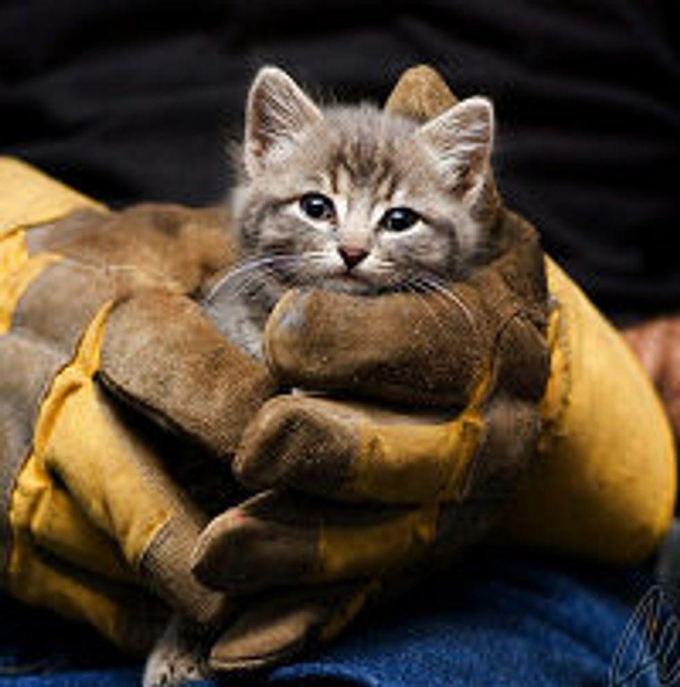 Barn Kitty Saved!