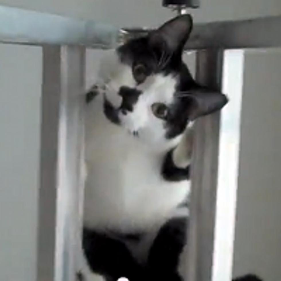 Kodi the Cat Climbs The Ladder