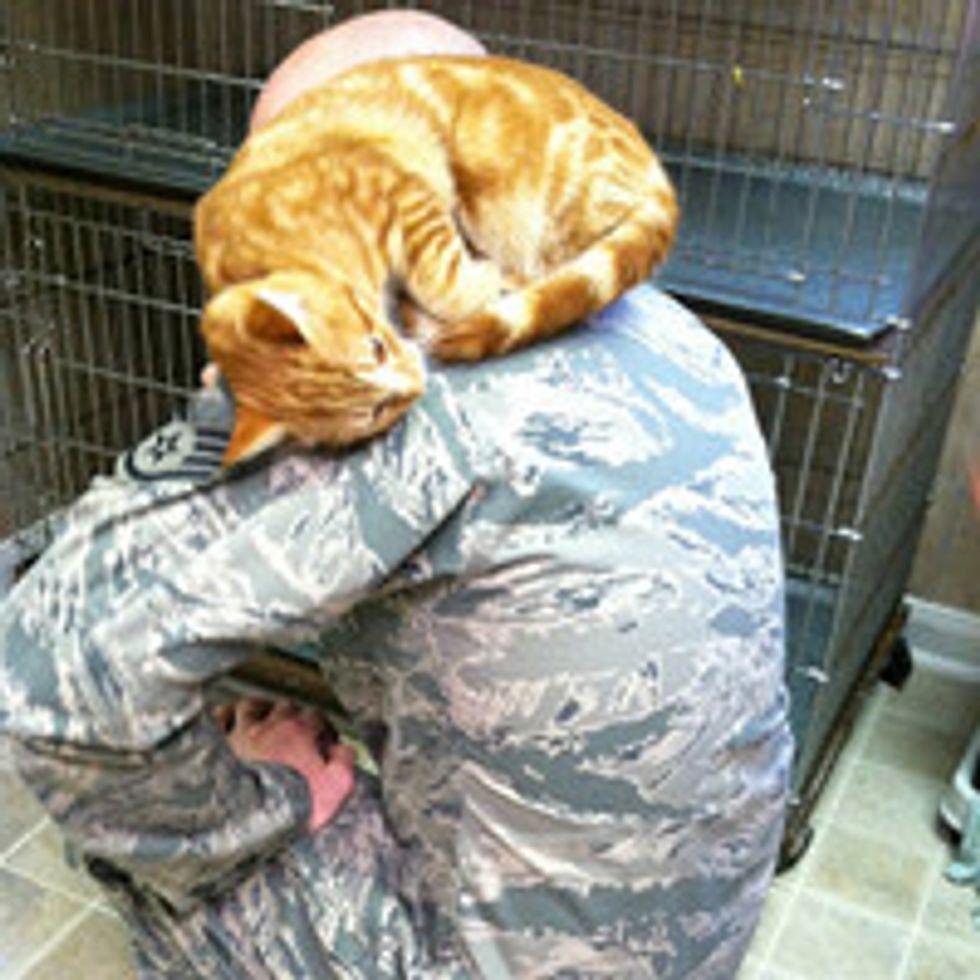 Shelter Cat Chooses Man For Forever Home