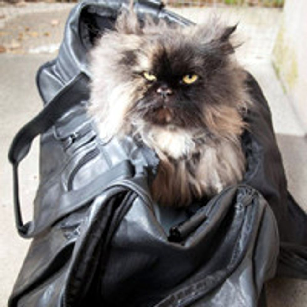 7-Year-Old Persian Cat Survives 3,400 Mile Journey from Cairo to London in a Suitcase