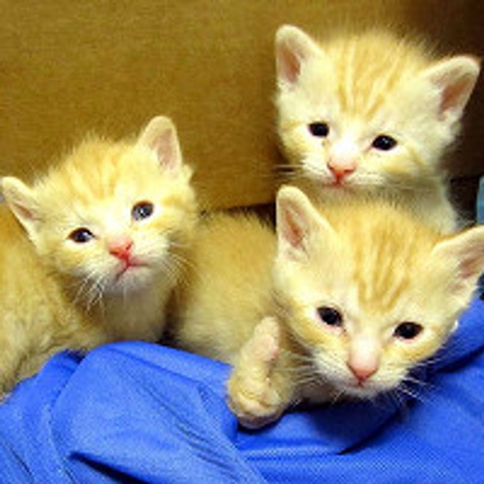 3 Special Orphan Kittens Born Missing Bones in Forearms, But It Doesn't Stop Them