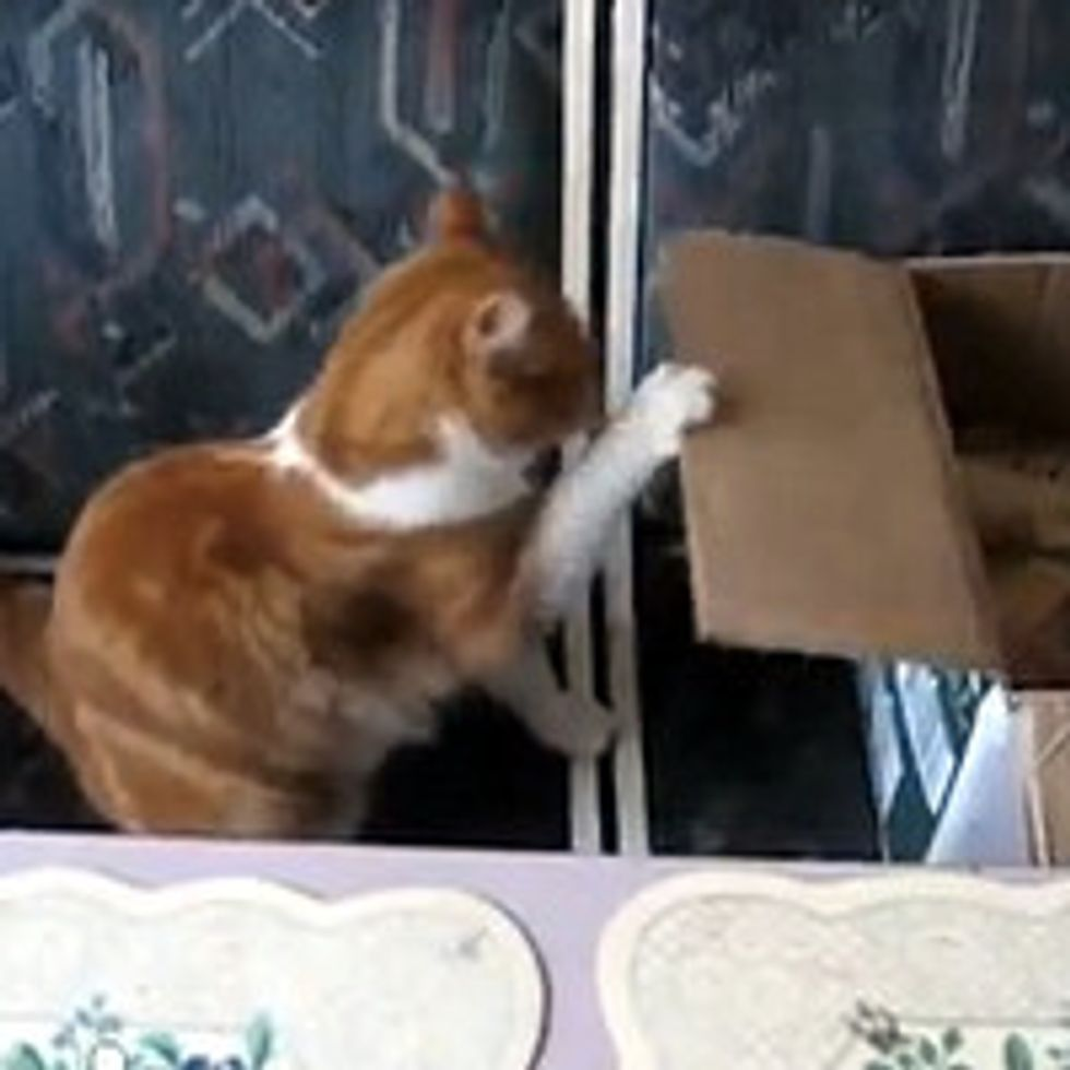Kitty Stamina Training for Boxing