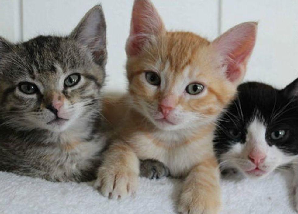 """Trash Bag"" Kitties Saved by Good Samaritan, Turn One Year"