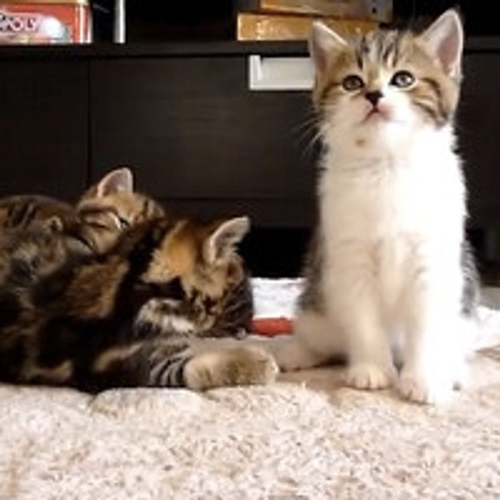 Little Kitten Has Hiccups