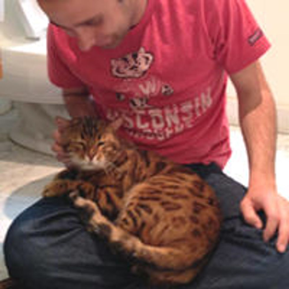 Abandoned Bengal Cat Finds Love In His New Home