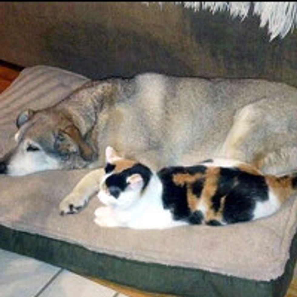 Cat Keeps Old Dog Company