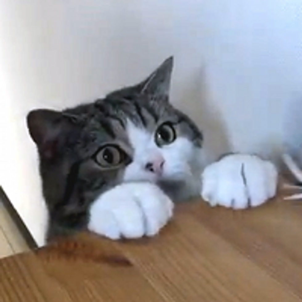 Many Things that Maru Does