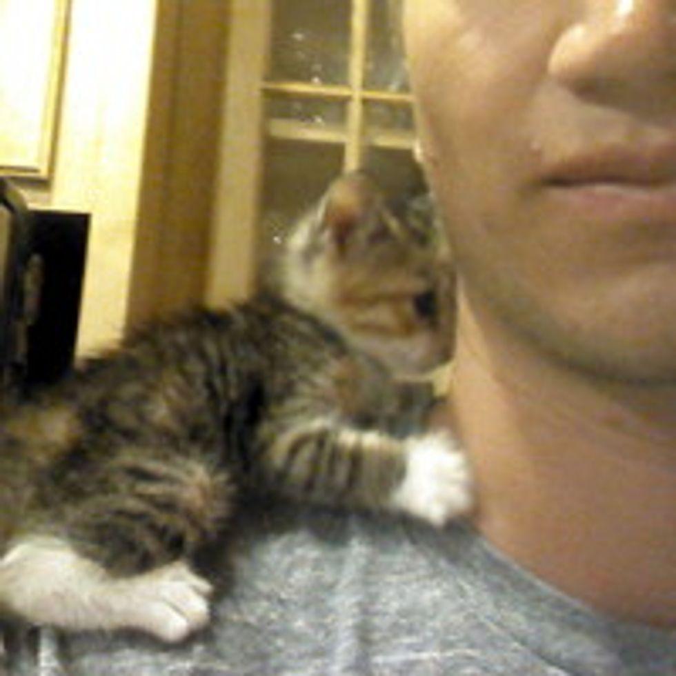 Kitten Finds Human and Follows Him Home