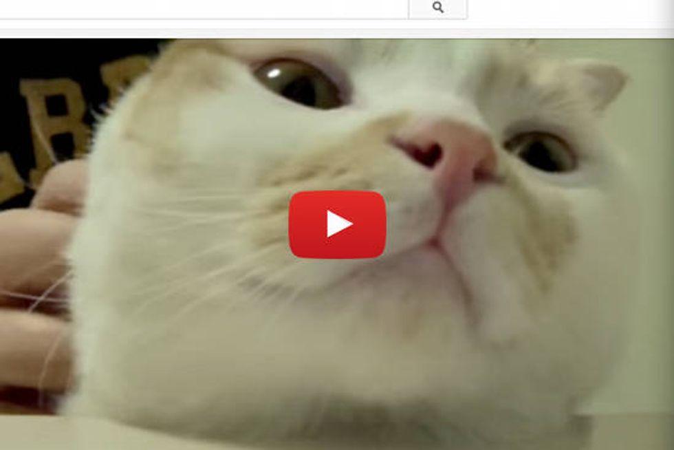 Massage Makes Kitty Happy