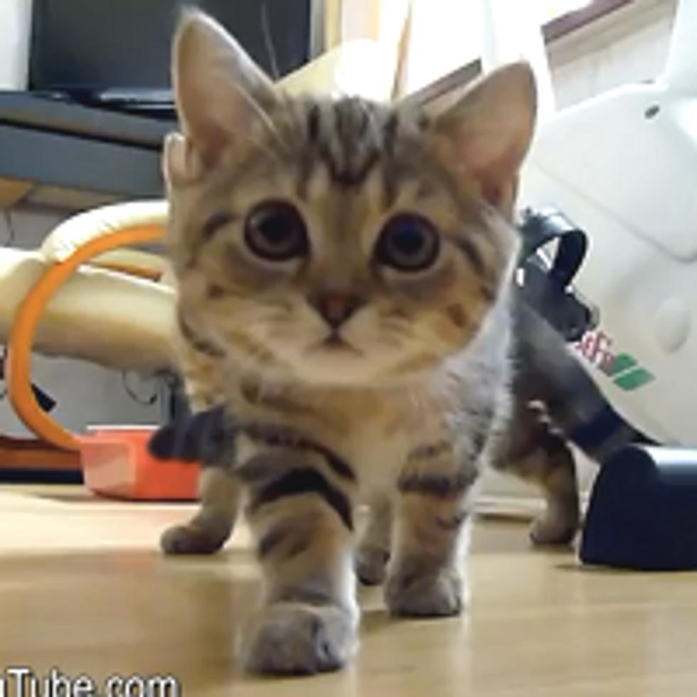 You Only Live Nine Times. Funny Cat Spy Thriller