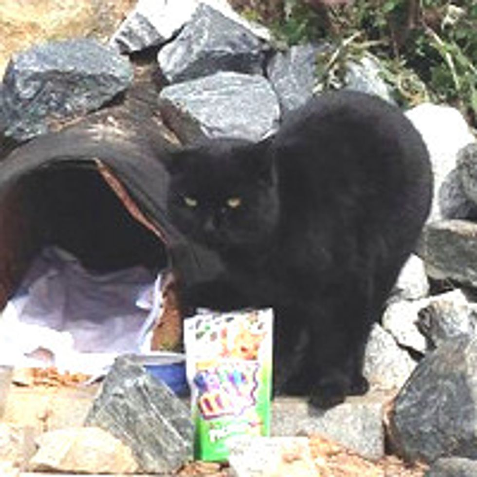 Cat Lives in Drainage Piper Becomes Mascot of the Beltline