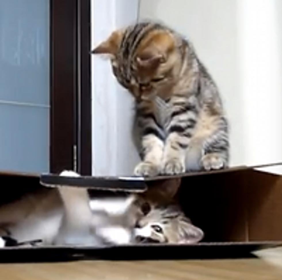Kitty Guards Box
