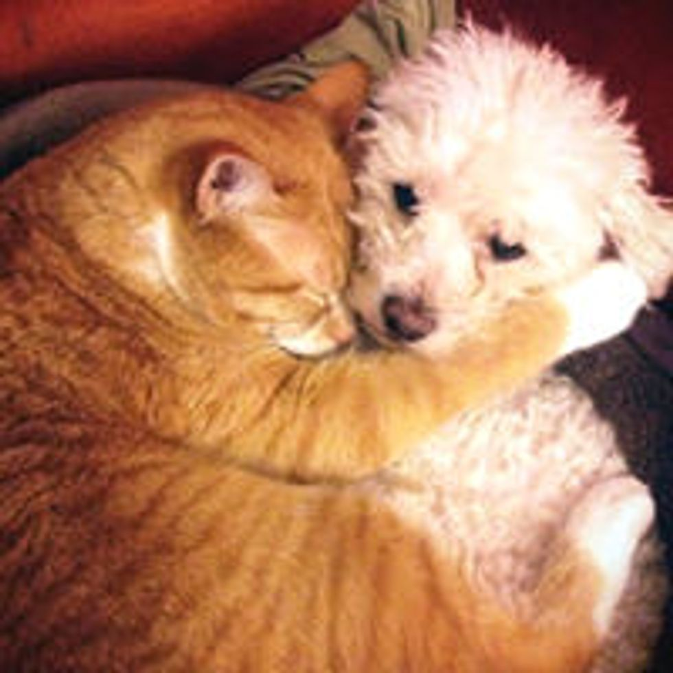 Cat Adopts Rescue Puppy: Cuddles and Love