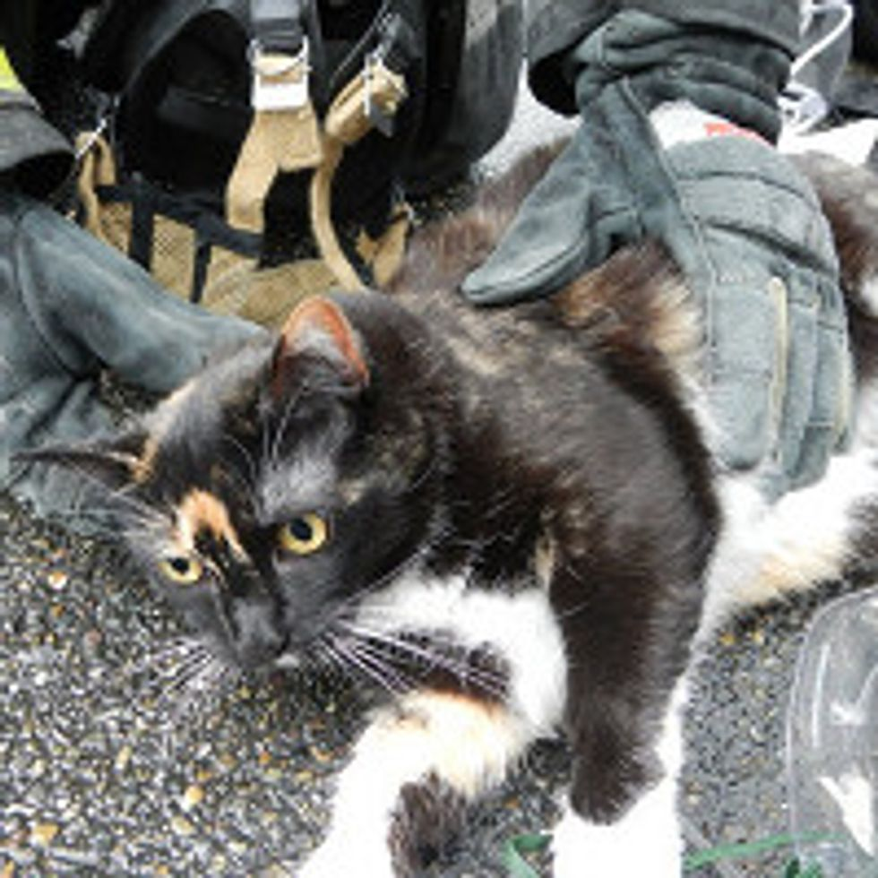 Seattle Firefighters Save and Revive Cat From Condo Complex Fire