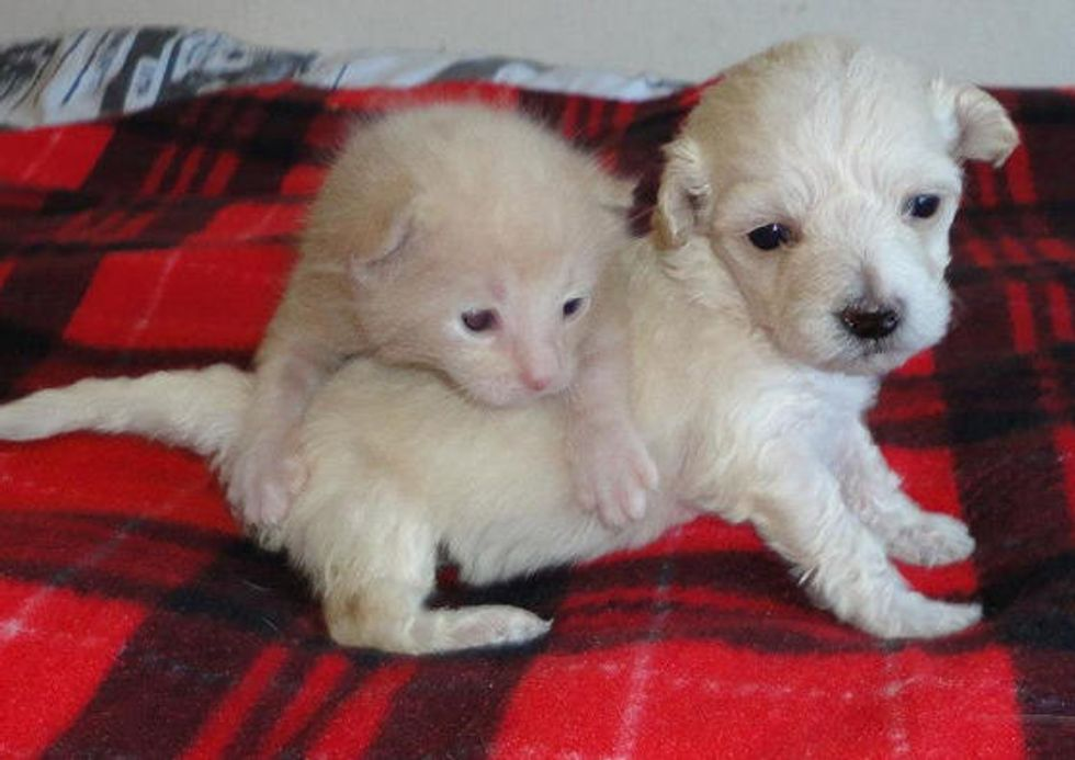 Orphan Kitten and Puppy: Now An Unconditional Family