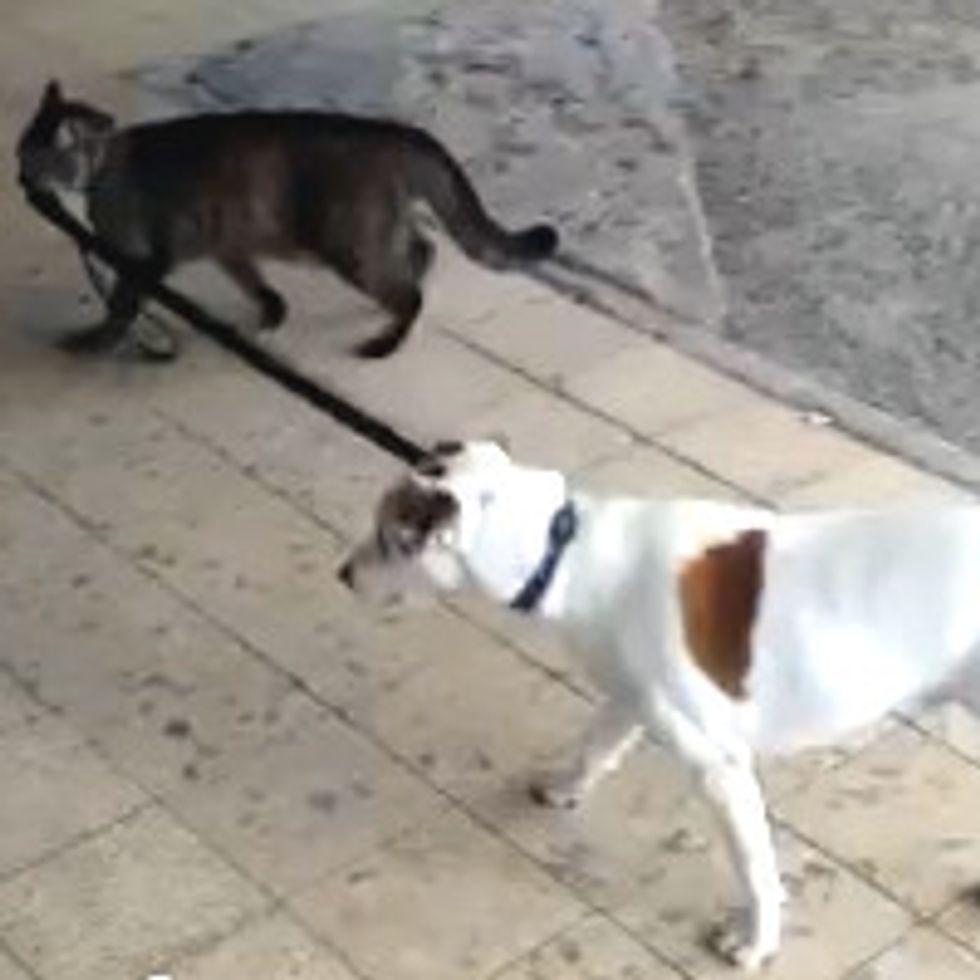 Cat Walking Dog Home