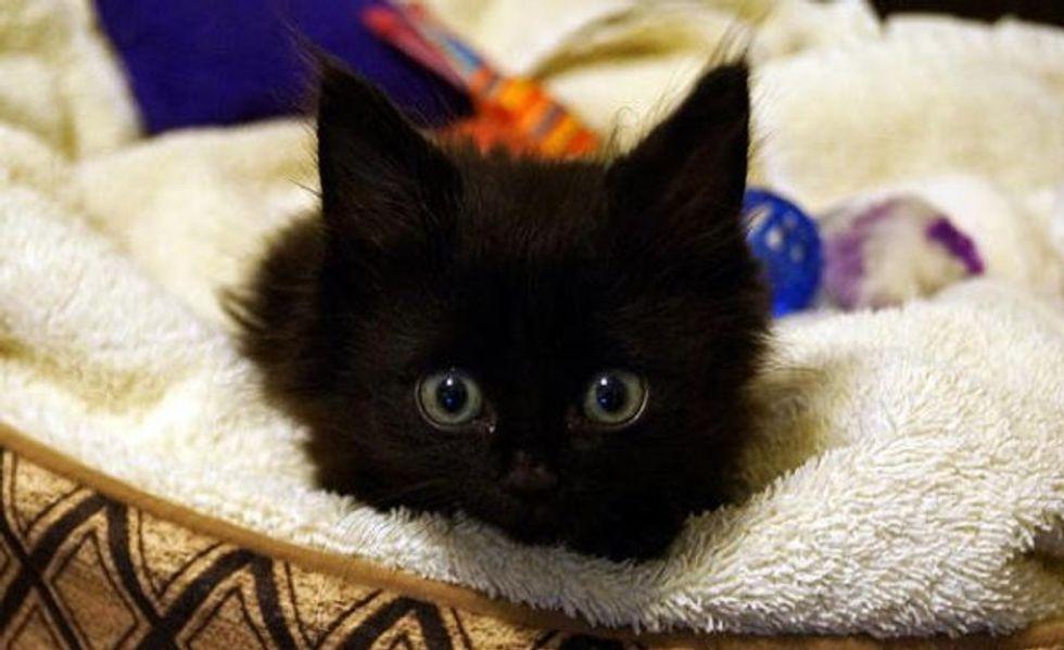 Lincoln The Miracle Kitty, No Longer Quadriplegic: Amazing Recovery