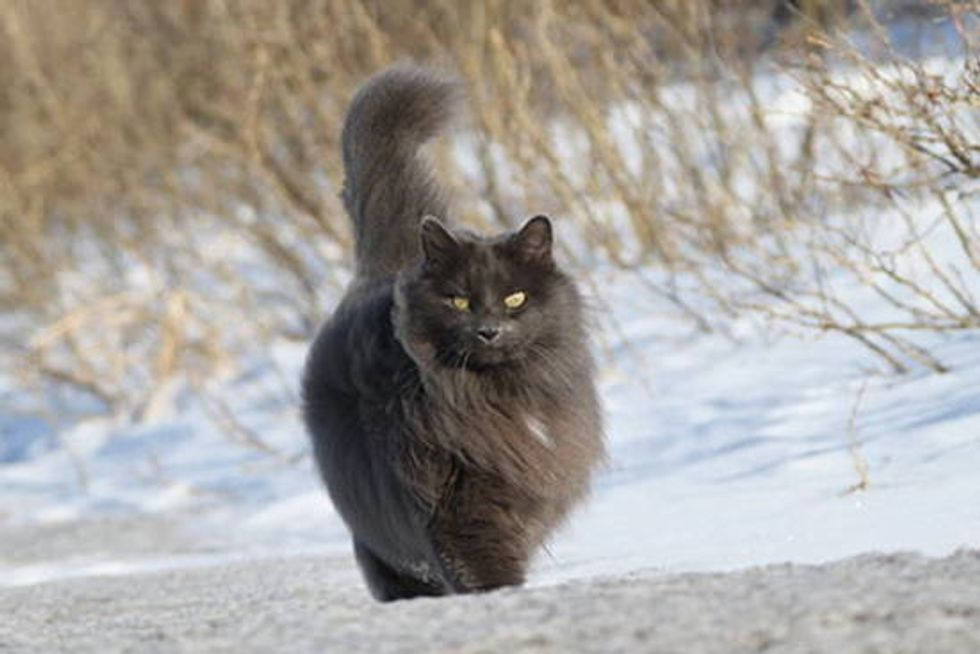 Sygmond The Grey - A Really Epic Cat
