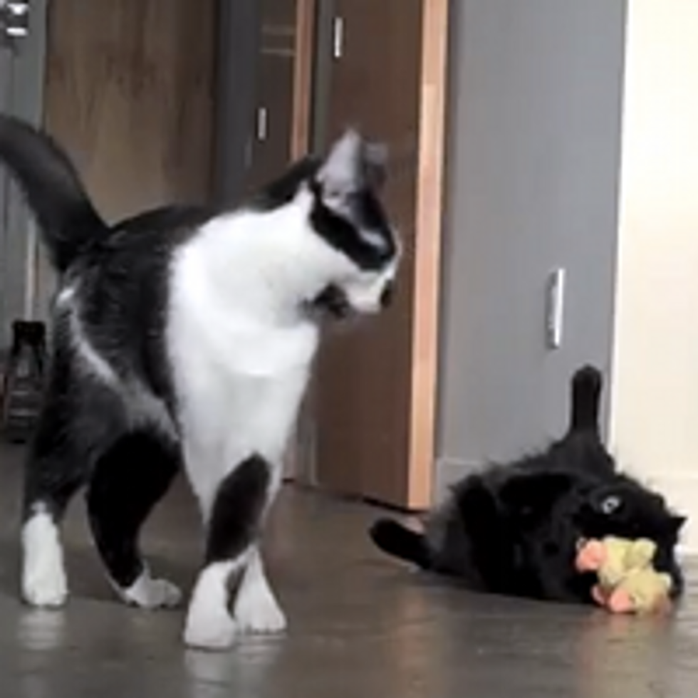 Shorty The Cat And The Easter Chick